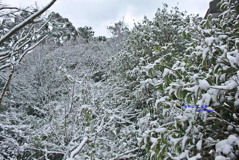 2016-台北陽明山-瑞雪-難得一見的雪白山景-17度C隨拍 (55)