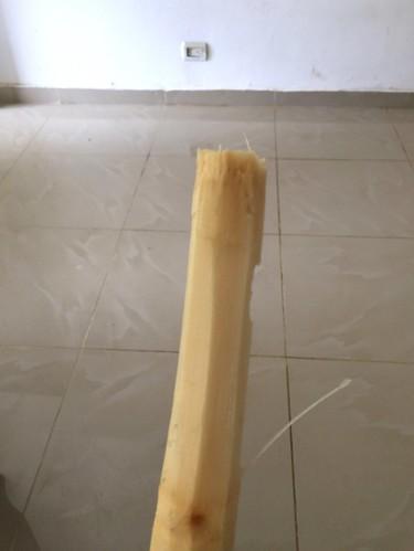 Fresh sugar cane / Frisches Zuckerrohr
