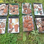 Finds after being washed – some of the finds discovered during the excavations. The artefacts include pottery, roof tile, glass and animal bone.
