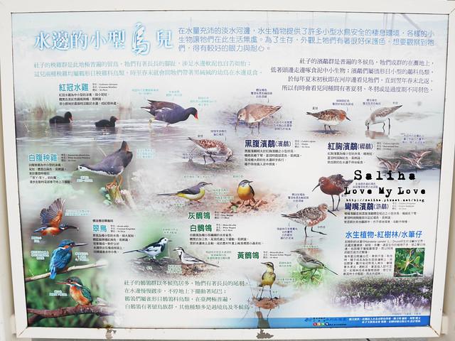 社子島溼地水鳥自行車道 (34)