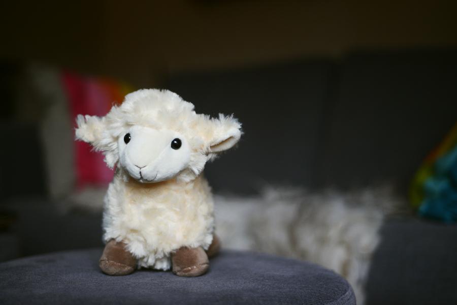 sheepahoy