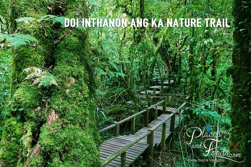 doi inthanon ang ka nature trail beautiful platform