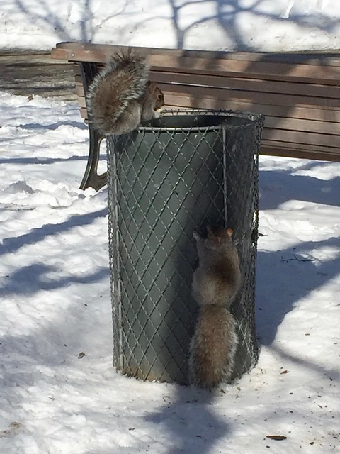 At the Squirrel Snack Bar