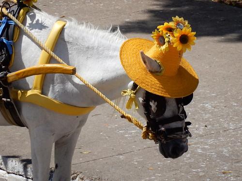Izamal - paard met hoedje
