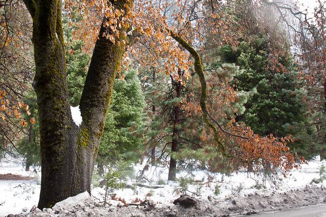 Winter Color in Yosemite