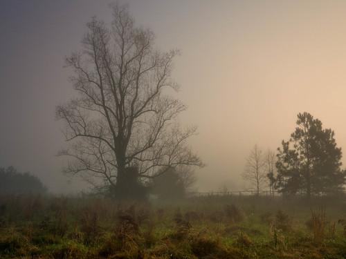 morning light nature beautiful fog sunrise spring glow foggy