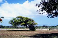 Bahamas 1989 (753) Long Island