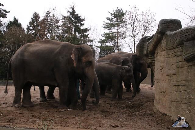Tierpark Hagenbeck 02.01.2015   3