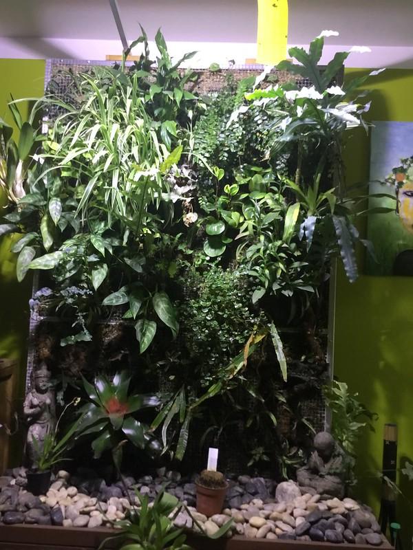 Mur végétal  23706155043_b2ce040ae2_c