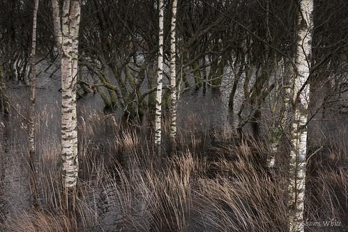 plant water grass wales woodland place cymru bog ceredigion wetland silverbirch corscaron shawnwhite canon6d