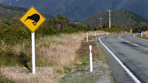 Attention kiwi