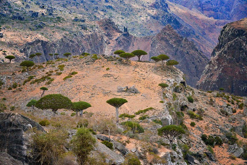 Dragon's Blood Trees, Socotra Is.