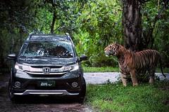 Honda BR-V  Photo credit: @hondaisme