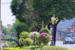 Chiang Mai 2015.