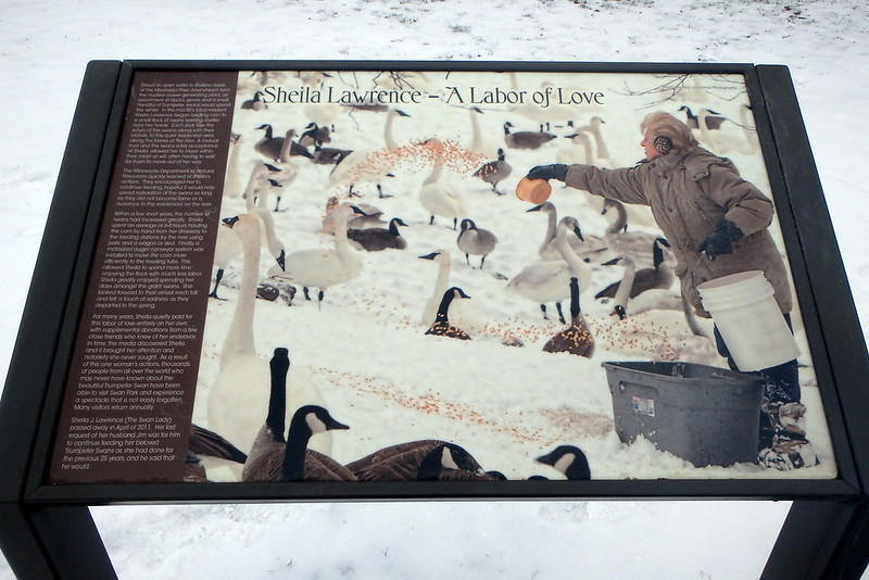interpretive sign with Sheila Lawrence's story and a picture of her throwing corn to the swans