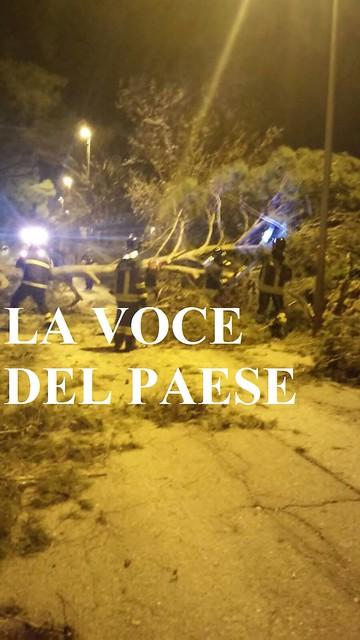 rutigliano caduta alberi caduto vigili del fuoco
