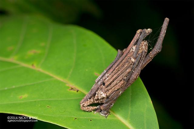 Bagworm moth (Psychidae) - DSC_7295