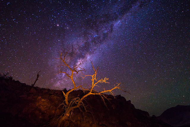 The tree and the universe