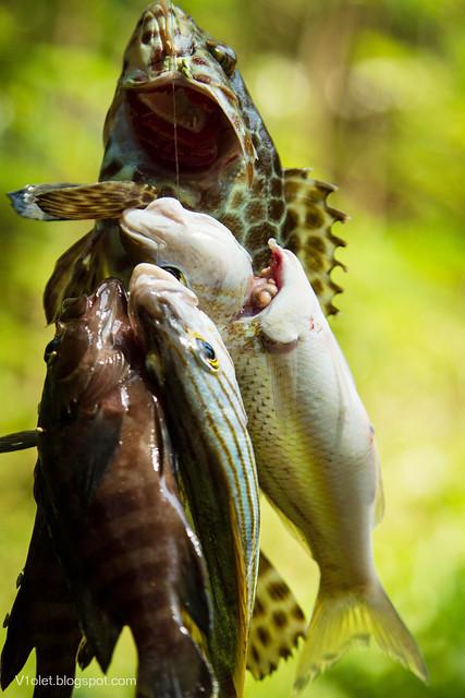 Ikan1-2209erw