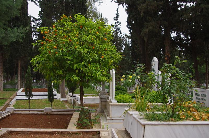 35- Mersin mezarlik
