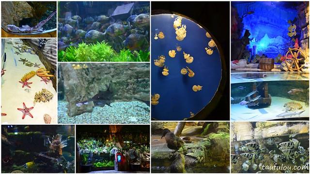 Dubai Aquarium (6)