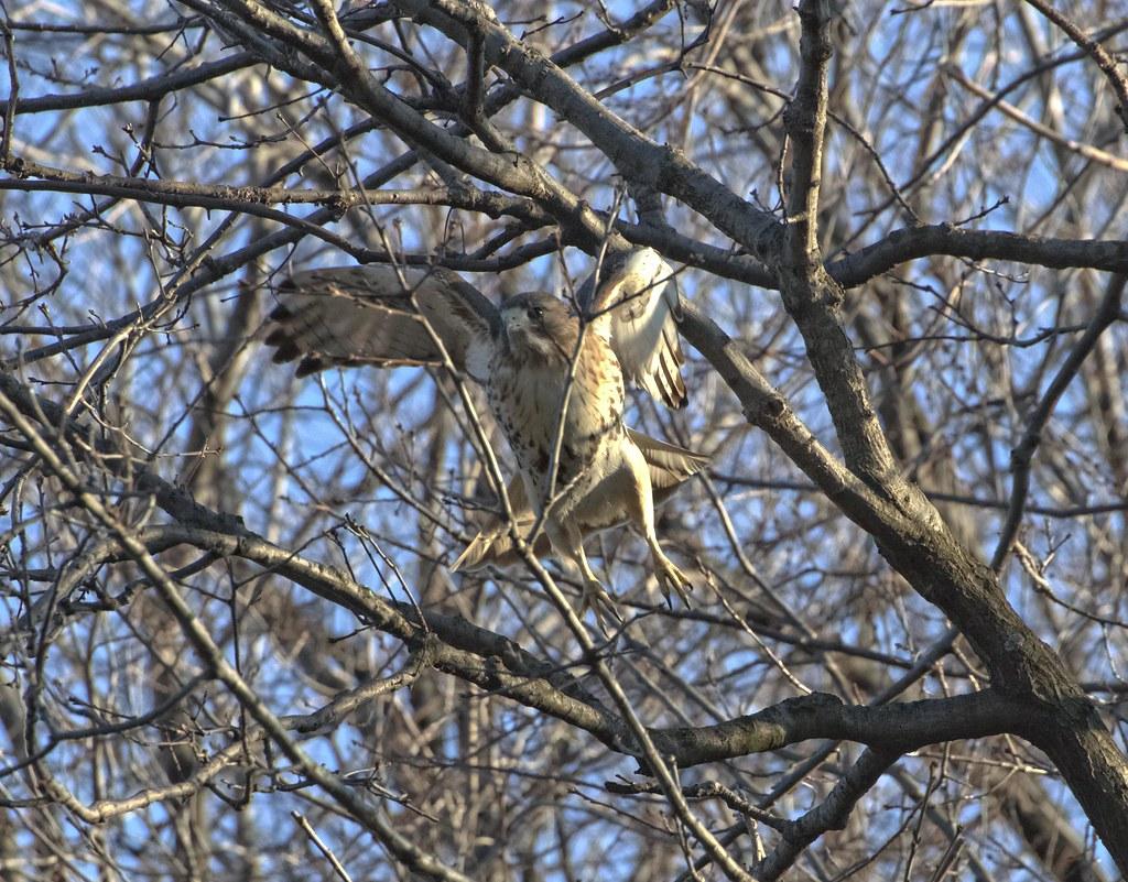 Christo navigates branches