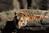 Photo:20160109 Hamamatsu Zoological Gardens 6 By BONGURI