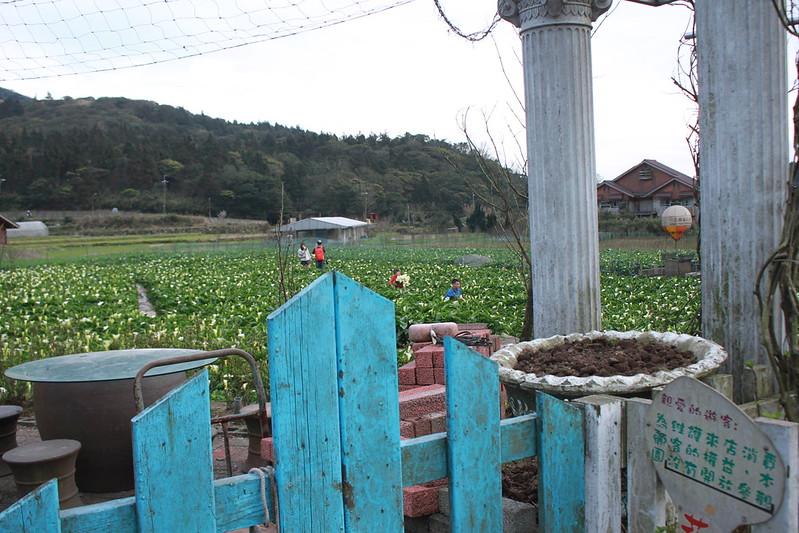 竹子湖採海芋-17度C隨拍 (88)