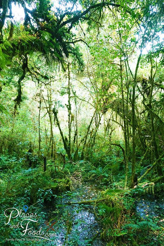 doi inthanon ang ka nature trail peat