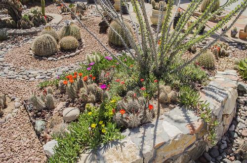 picture of cactus garden