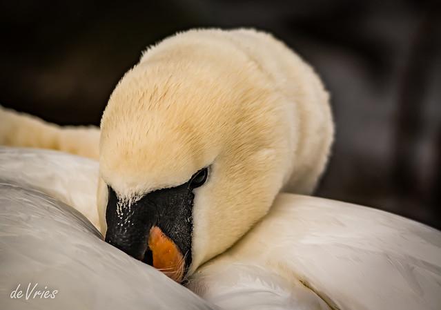 Sleeping Giant . . .