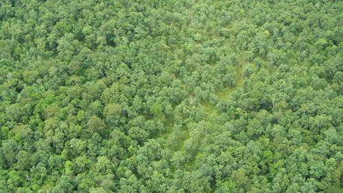 ป่าแม่วงก์