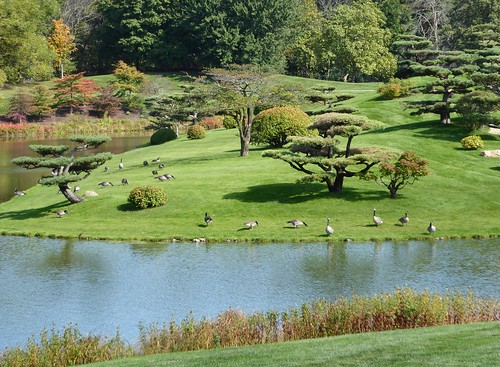 trees plants lake chicago green nature water landscape japanesegarden pond flora canadageese chicagobotanicgarden coth5