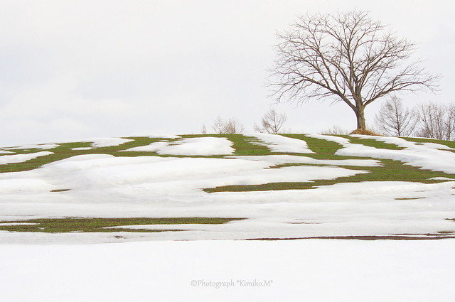 牧草地の丘