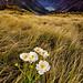 Sweet lilly dawn by robjdickinson