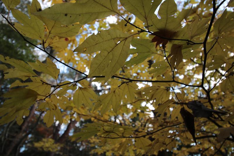 20141122-武奈ヶ岳&京都ライトアップ-0450.jpg