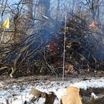 Burning cut wood