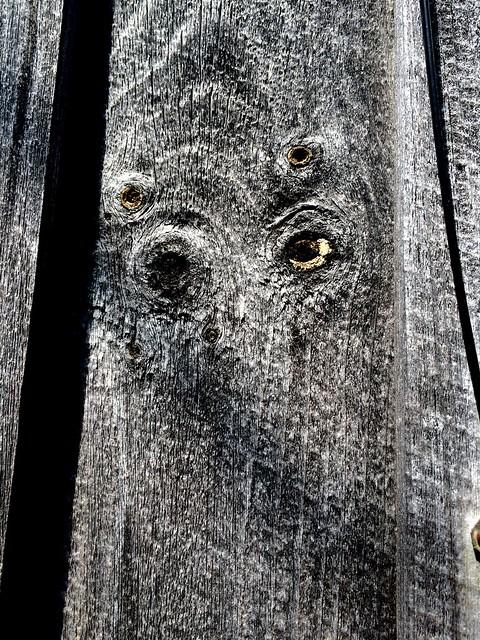 board owl1
