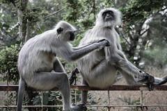 Inde, faune