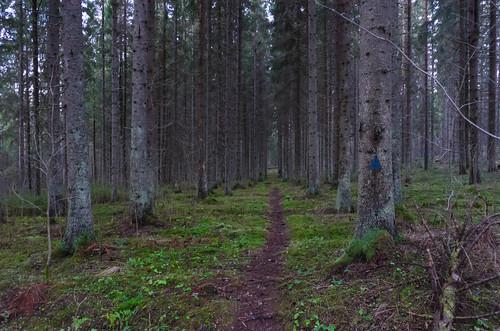 nature finland nikon fi kangasala pirkanmaa laipanmaa