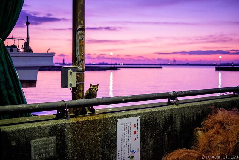 Tokushima Cat Color #242