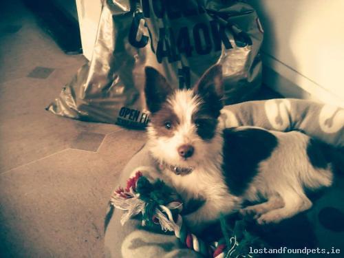 Wed, Jan 27th, 2016 Lost Male Dog - West Street, Callan, Kilkenny