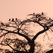 African Sky with the Baobab tree