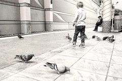 #DailyPigeon 031716 (with some randoms)