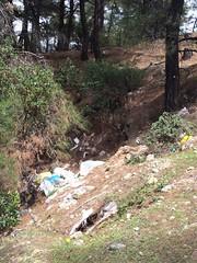 Σκουπίδια μέσα στο δάσος κοντά στη περιοχή Αναβάλοσες της Ψίνθου