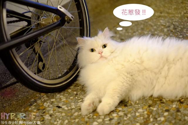 26106559635 dd9ff0c02e z - 超可愛貓咪寵物餐廳【巷子有貓】,逢甲巷弄無菜單美食~一定要預約才吃的到的日式家常菜!(已歇業)