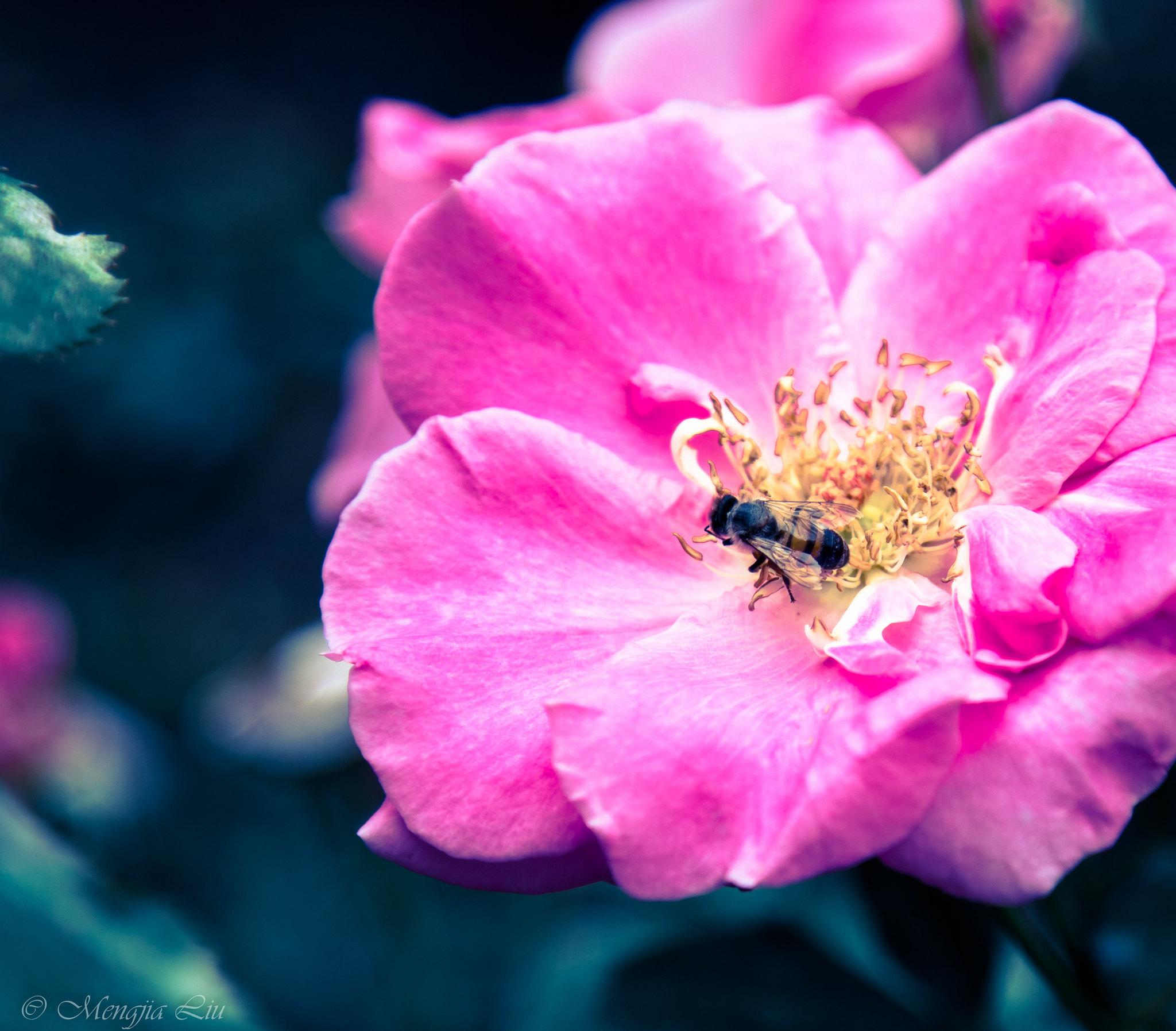 Honeyquest