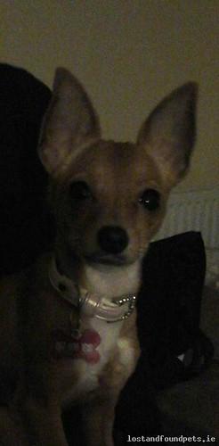 Mon, Apr 25th, 2016 Lost Female Dog - Wood On Bree Hill, Bree, Enniscorthy, Wexford