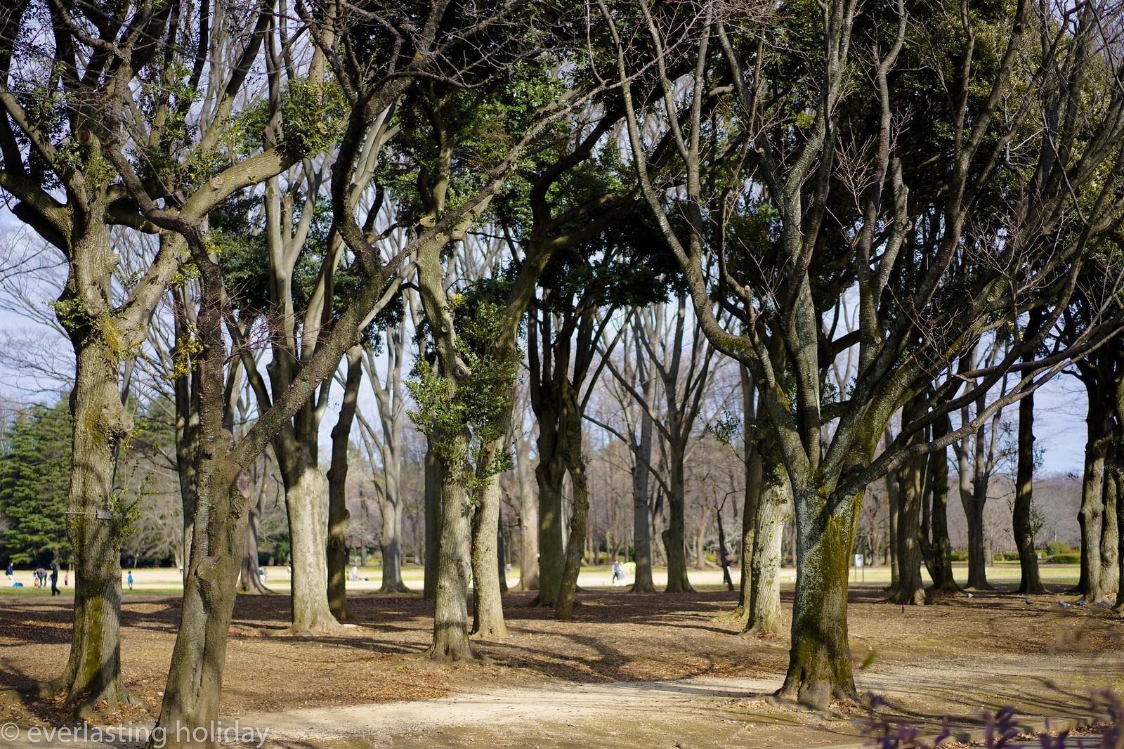 小金井公園 Koganei Park-0021