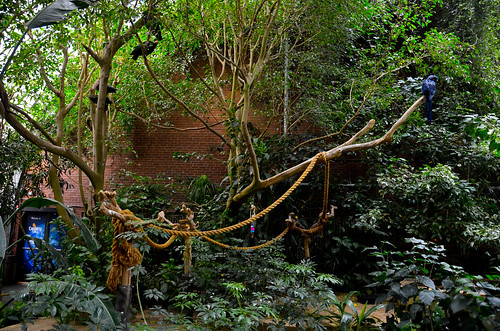 National Aviary - Jungle Room